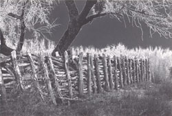 Brush Fence